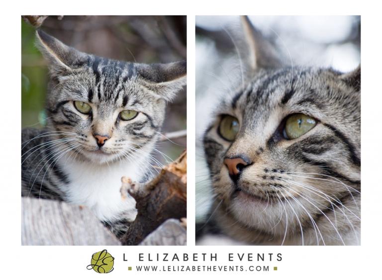 cat portrait, denver cat photographer, colorado pet photography