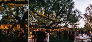 outdoor reception, scottsdale wedding planner, arizona weddings, guests under the trees