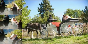 horse and carriage, ceremony recessional, clear creek history park, golden colorado, wedding photographer, colorado wedding planner