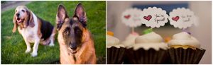 dog portrait, cupcakes
